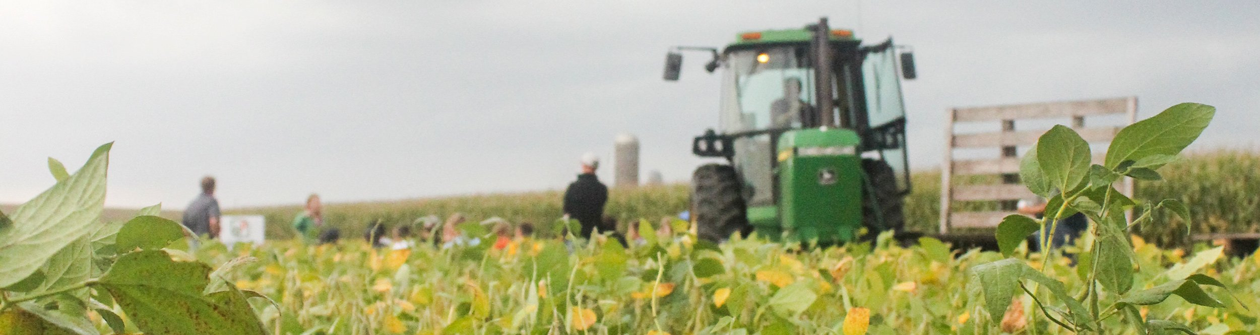 Several men and a tractor in a soybean field.