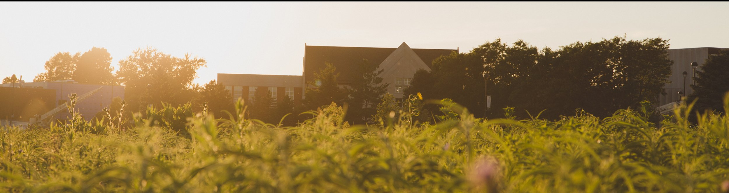 Green plants on Dordt's campus on a hazy summer day.